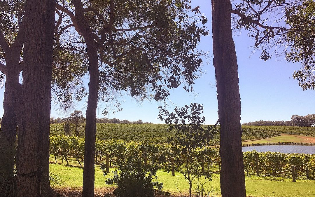 margaret-river-wineries-Aravina-estate-View