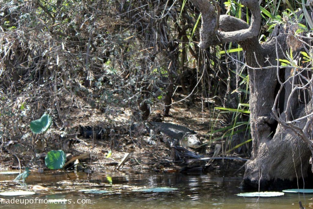 tour-of-darwin-local-croc