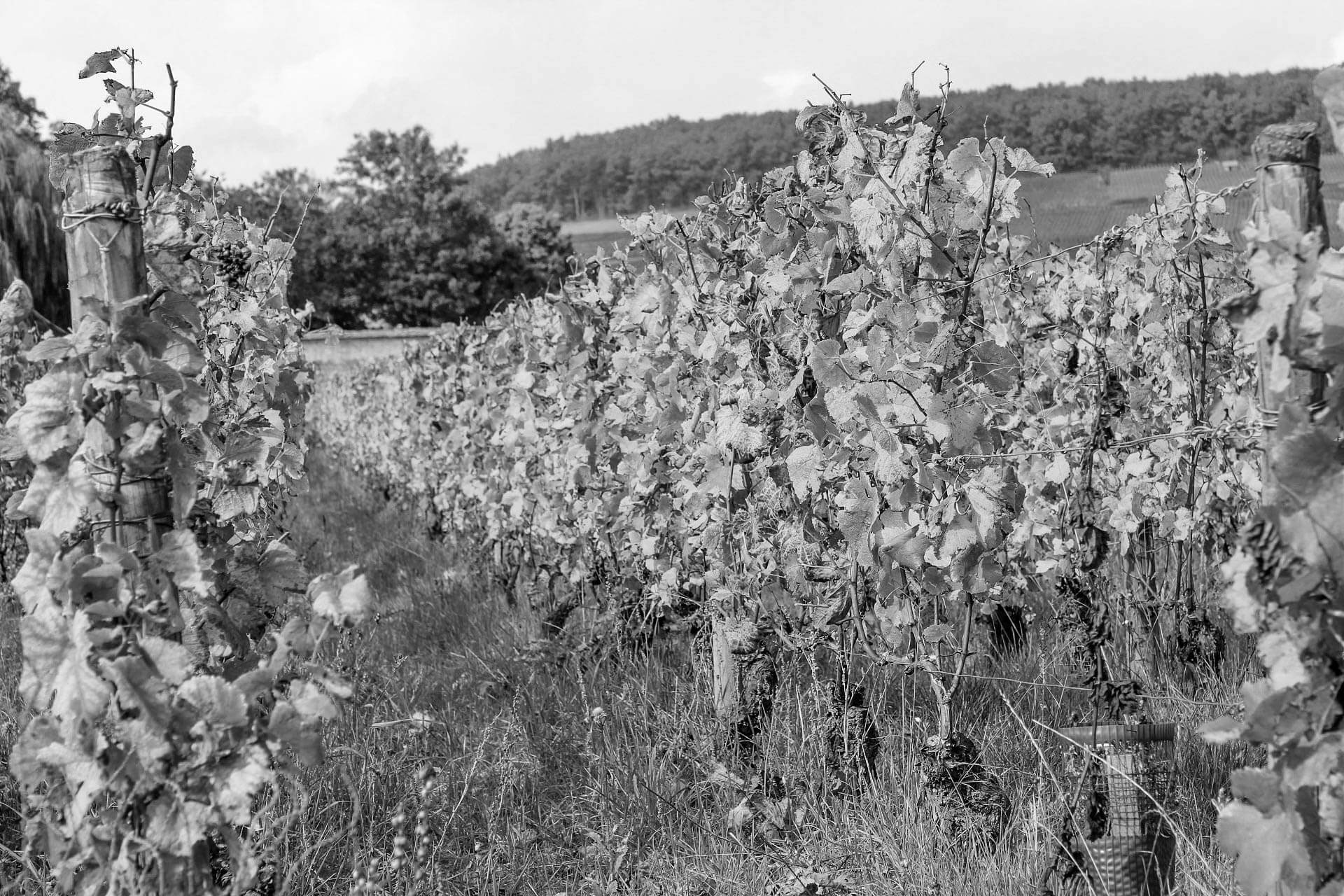 travel-adventures-vineyard