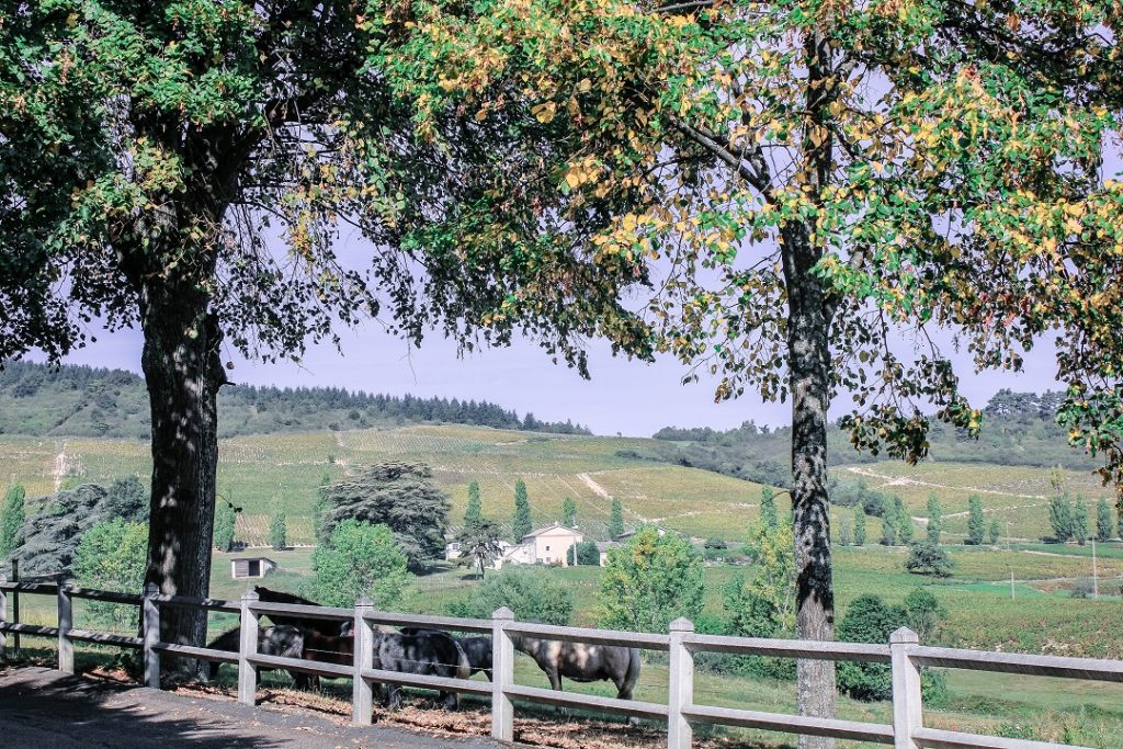 burgundy-region-odenas